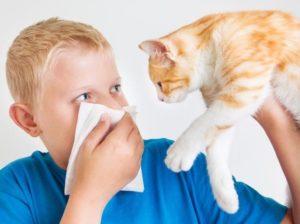 mediqpol biorezonans przy alergii na psa lub kota objawy