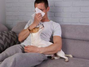Przyczyny alergii na zwierzęta domowe